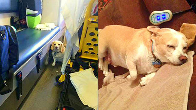Dog Hitches a Ride on Side of Ambulance to Be with Owner