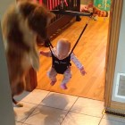 Jumping Baby Delighted by Jumping Dog