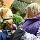 Elderly Disabled Woman's Life Transformed by Service Dog