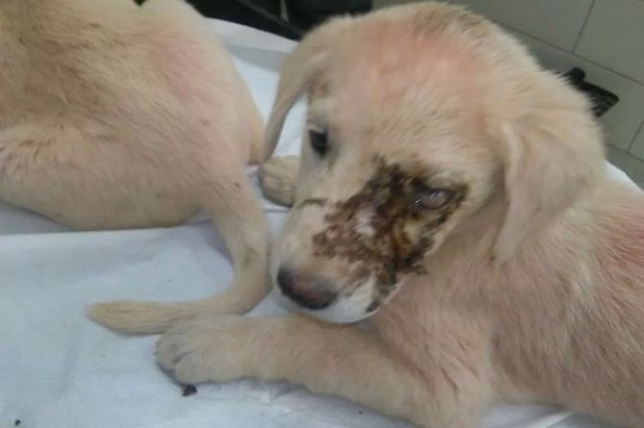 11.18.14 - Family Rescues One-Eyed Dog off the Streets of CyprusFeat
