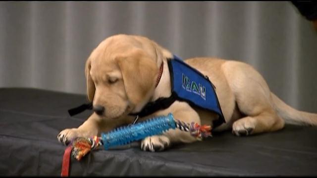 K9 Service Puppy Named After Hero Officer