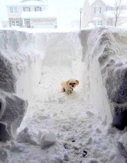 11.21.14 - Buffalo Snow Dogs10