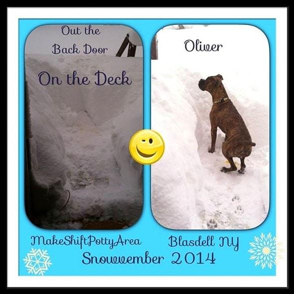 11.21.14 - Buffalo Snow Dogs11