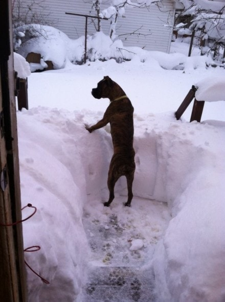 11.21.14 - Buffalo Snow Dogs12