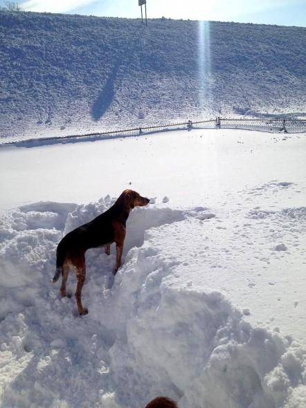 11.21.14 - Buffalo Snow Dogs16