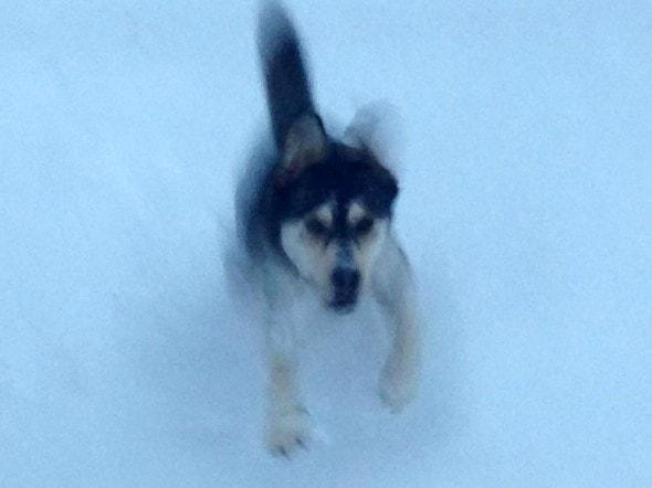 11.21.14 - Buffalo Snow Dogs17