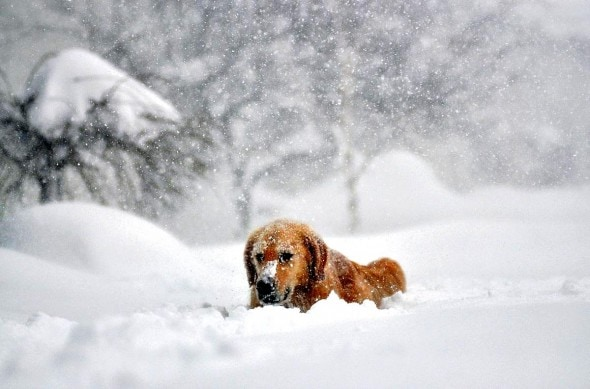 11.21.14 - Buffalo Snow Dogs2
