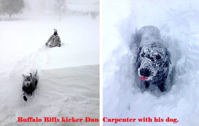 Buffalo Dogs Battling the Blizzard