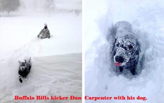 Buffalo Dogs Battling the Blizzard