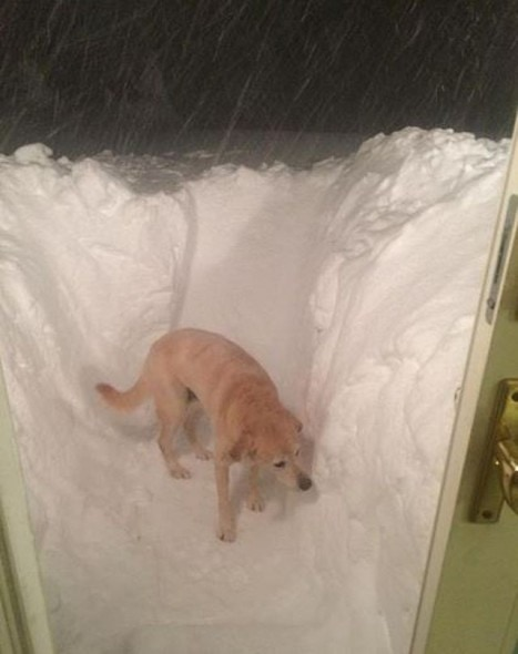 11.21.14 - Buffalo Snow Dogs6