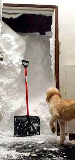 11.21.14 - Buffalo Snow Dogs8