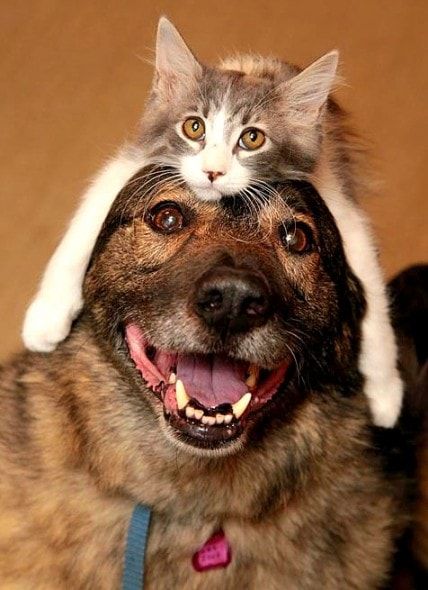 Dogs Wearing Cat Hats Life With Dogs