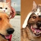 Dogs Wearing Cat Hats