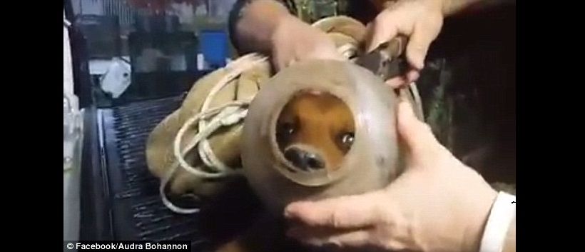 Puppy with Bucket Stuck on It's Head Saved by Family