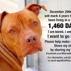 1427 Days in a Kennel