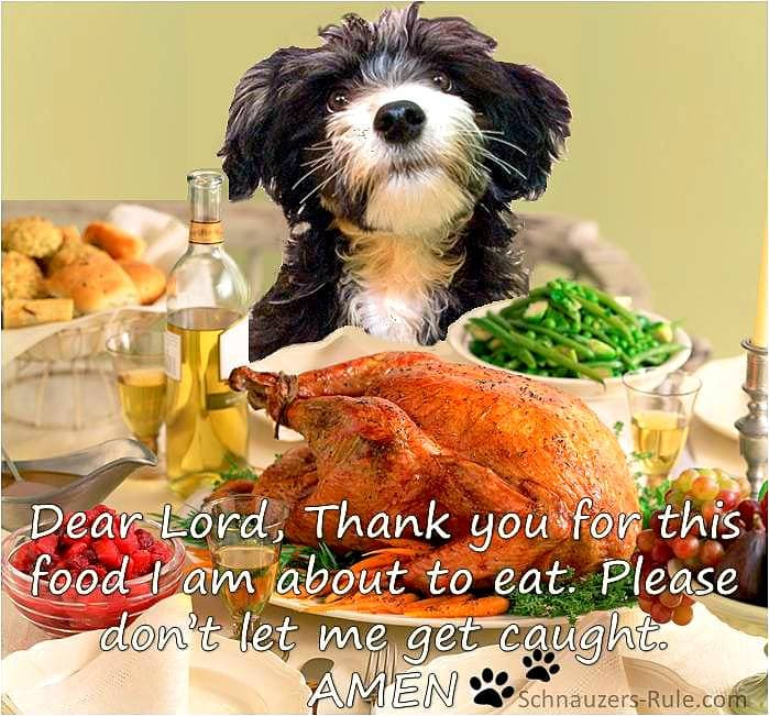 16 Best Doggie Thanksgiving Photos - LIFE WITH DOGS