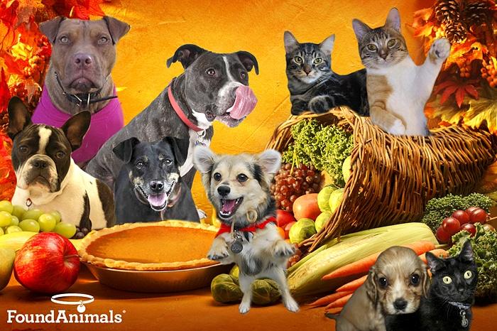 Thanksgiving Dog Show Youtube