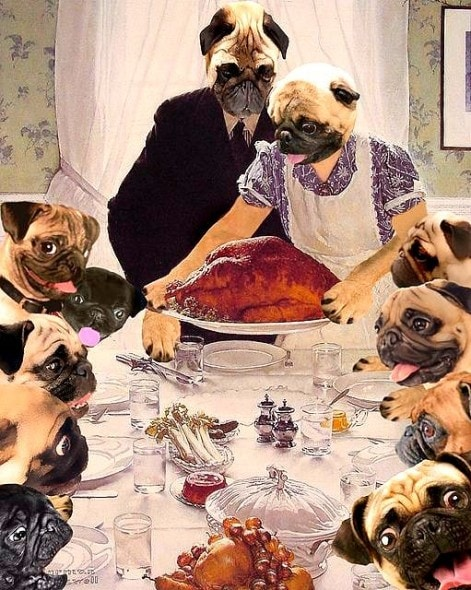 11.27.14 - Thanksgiving Dogs16