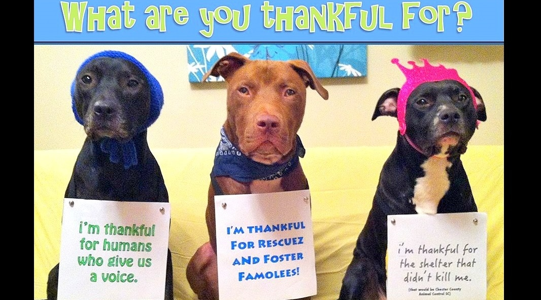 16 Best Doggie Thanksgiving Photos