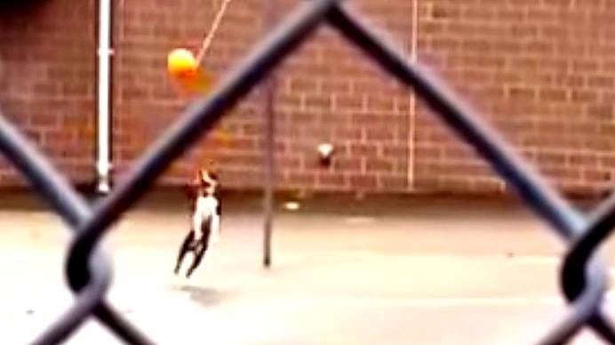 Dog Plays Tetherball by Itself