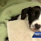 Abandoned Miracle Puppy Survives Weeks Locked in Kennel