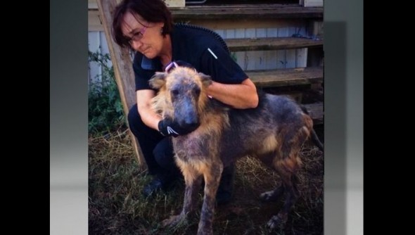 11.3.14 - SPCA of Texas Assists in Bust at Puppy Mill