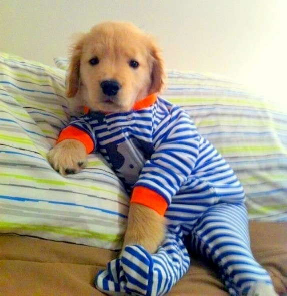 11.30.14 - Puppies in Jammies1
