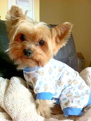 11.30.14 - Puppies in Jammies10