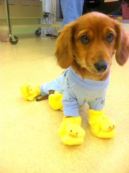 11.30.14 - Puppies in Jammies11