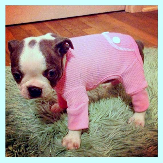 11.30.14 - Puppies in Jammies12