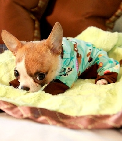11.30.14 - Puppies in Jammies14