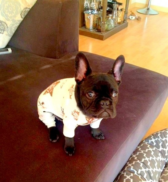 11.30.14 - Puppies in Jammies17