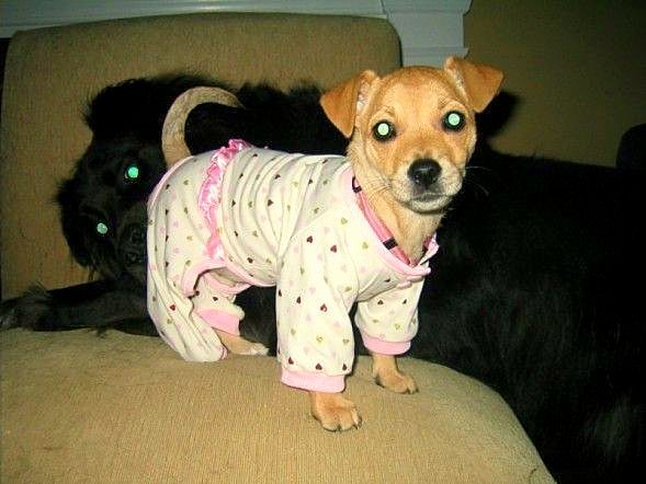 11.30.14 - Puppies in Jammies18