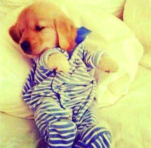 11.30.14 - Puppies in Jammies19