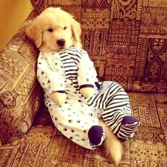 11.30.14 - Puppies in Jammies20