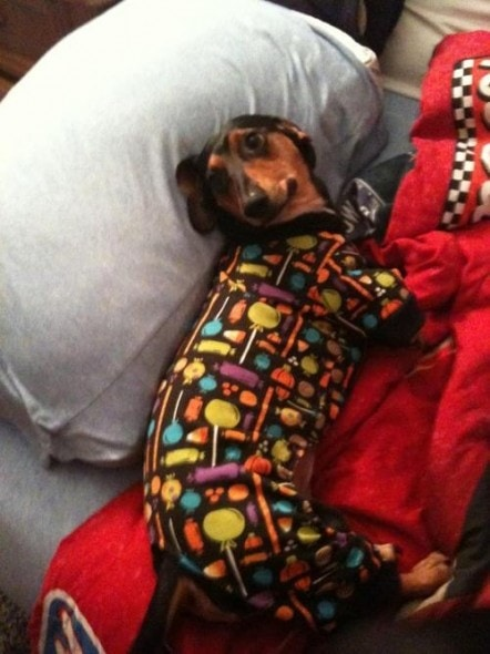 11.30.14 - Puppies in Jammies24