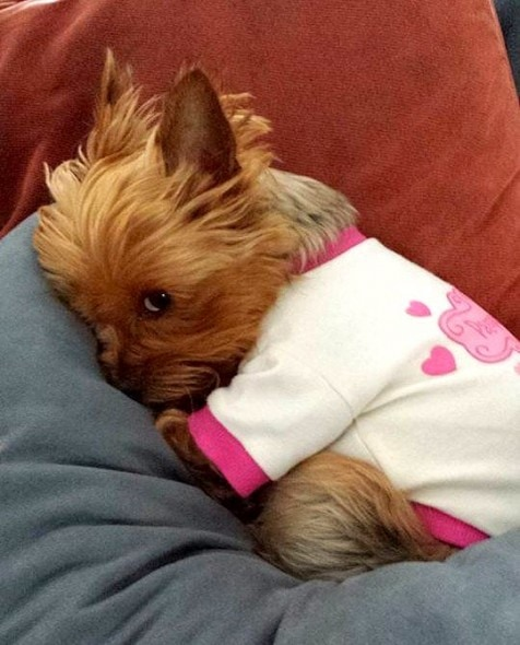 11.30.14 - Puppies in Jammies25