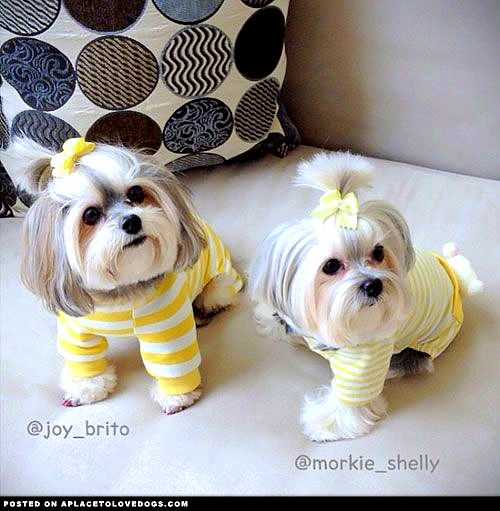 11.30.14 - Puppies in Jammies26