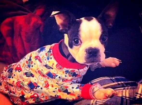 11.30.14 - Puppies in Jammies28