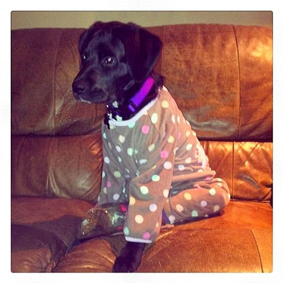 11.30.14 - Puppies in Jammies3