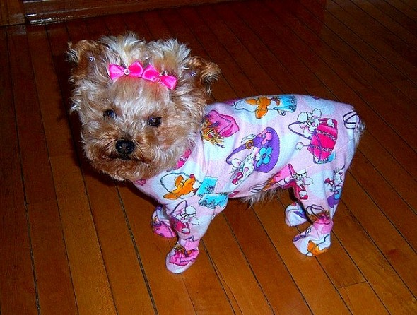 11.30.14 - Puppies in Jammies30