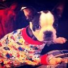 Puppies in PJs!
