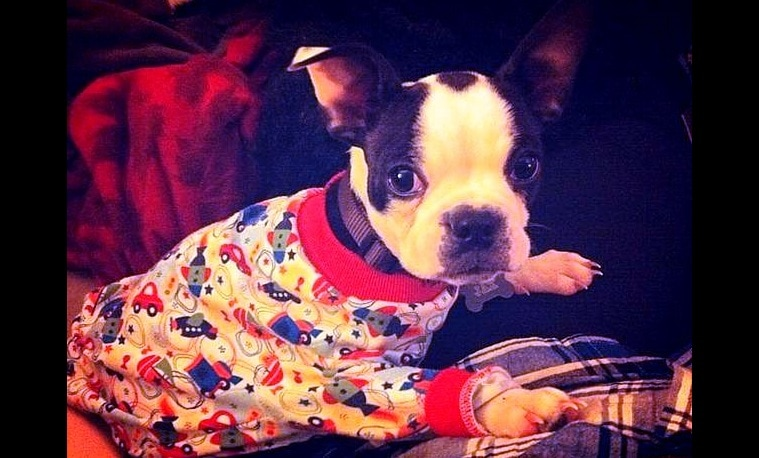 Puppies in PJs!