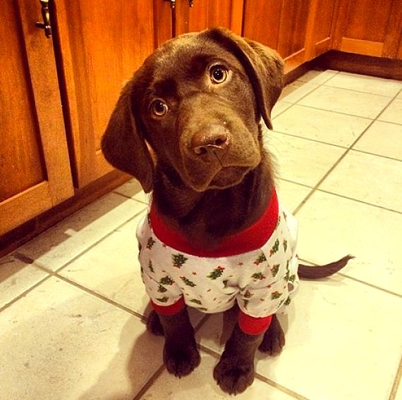 11.30.14 - Puppies in Jammies6