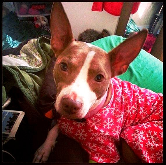 11.30.14 - Puppies in Jammies7