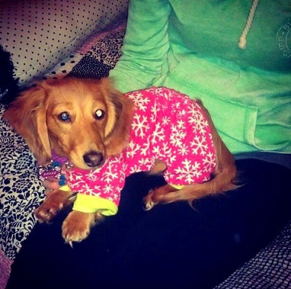 11.30.14 - Puppies in Jammies8