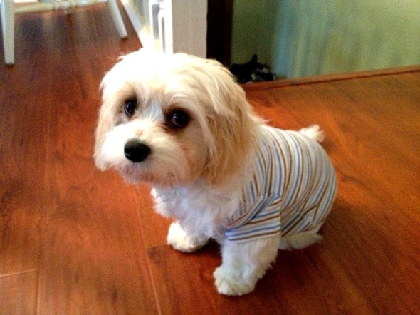 11.30.14 - Puppies in Jammies9