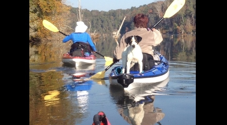 Dog Stuck in the Tellico River Rescued By Kayakers