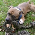 County Run Dog Shelter Nears Capacity and Desperately Needs Adoptions