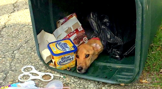 Woman Who Left Starved Dog in Trash Found & Charged